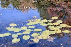 Fall Photos From Wolcott CT's Mill Pond Way # (63)