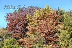 Fall Photos From Wolcott CT's Mill Pond Way # (64)