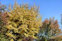Fall Photos From Wolcott CT's Mill Pond Way # (65)