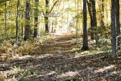 Fall Photos From Wolcott CT's Mill Pond Way # (71)