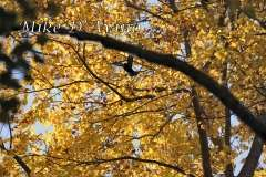 Fall Photos From Wolcott CT's Mill Pond Way # (72)