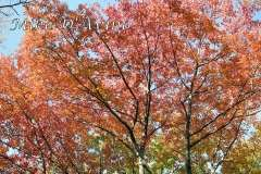 Fall Photos From Wolcott CT's Mill Pond Way # (73)