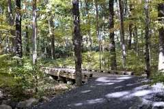 Fall Photos From Wolcott CT's Mill Pond Way # (76)