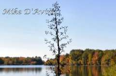 Fall Photos From Wolcott CT's Mill Pond Way # (77)