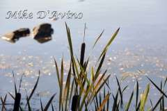 Fall Photos From Wolcott CT's Mill Pond Way # (80)