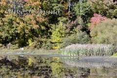 Fall Photos From Wolcott CT's Mill Pond Way # (92)