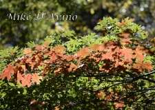 Fall Photos From Wolcott CT's Mill Pond Way # (95)