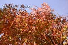 Fall Photos From Wolcott CT's Mill Pond Way # (97)