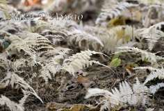Fall Photos From Wolcott CT's Mill Pond Way # (99)