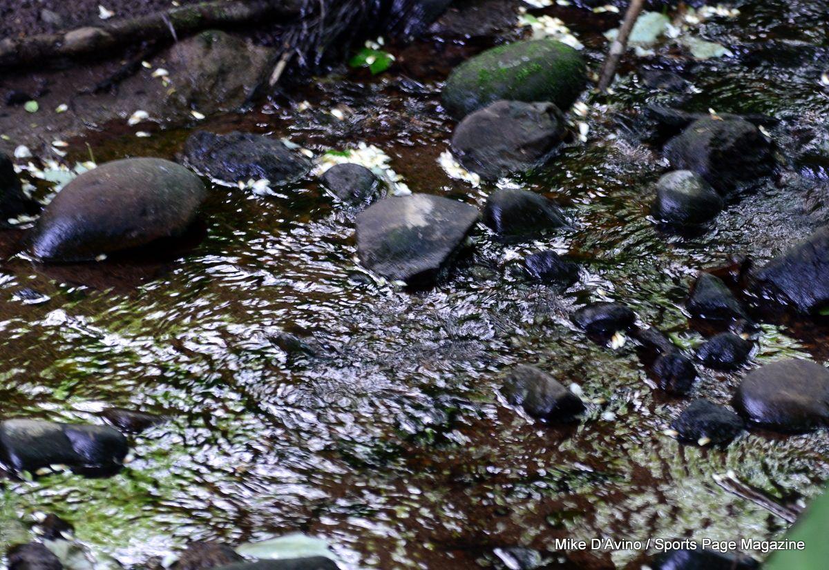 Farmington Canal Trail Hamden - Photo # 009