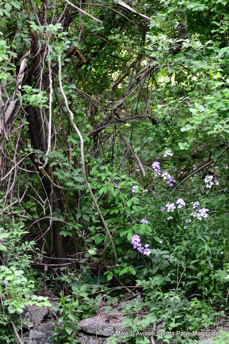Farmington Canal Trail Hamden - Photo # 013