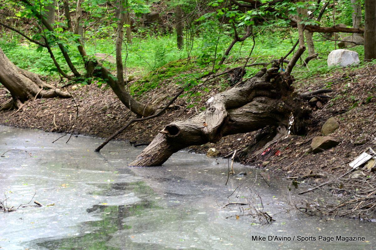Farmington Canal Trail Hamden - Photo # 036