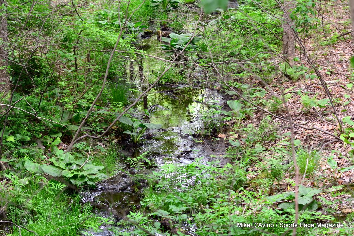 Farmington Canal Trail Hamden - Photo # 037