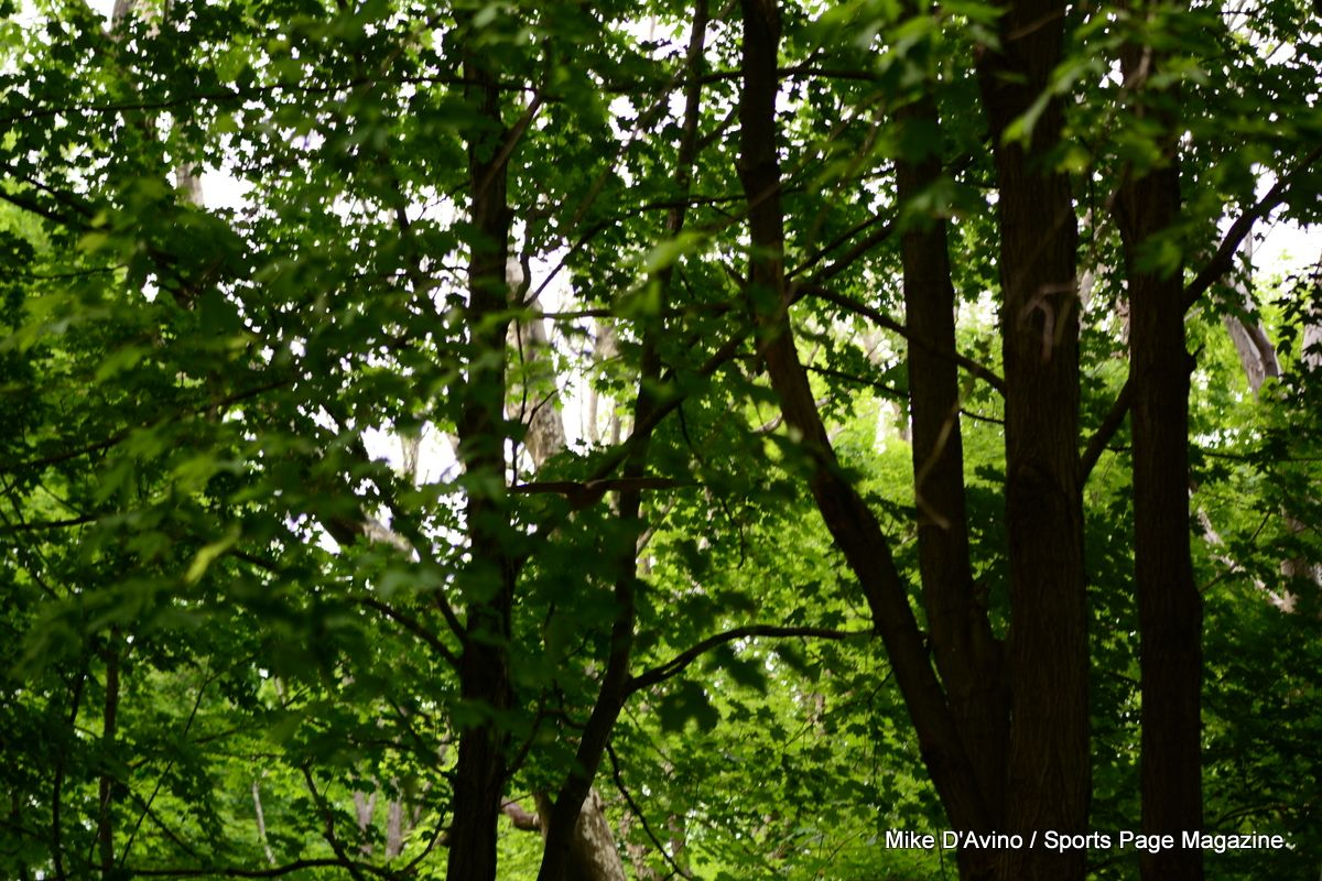 Farmington Canal Trail Hamden - Photo # 044