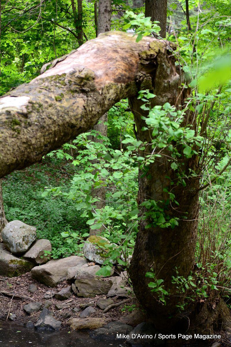Farmington Canal Trail Hamden - Photo # 048