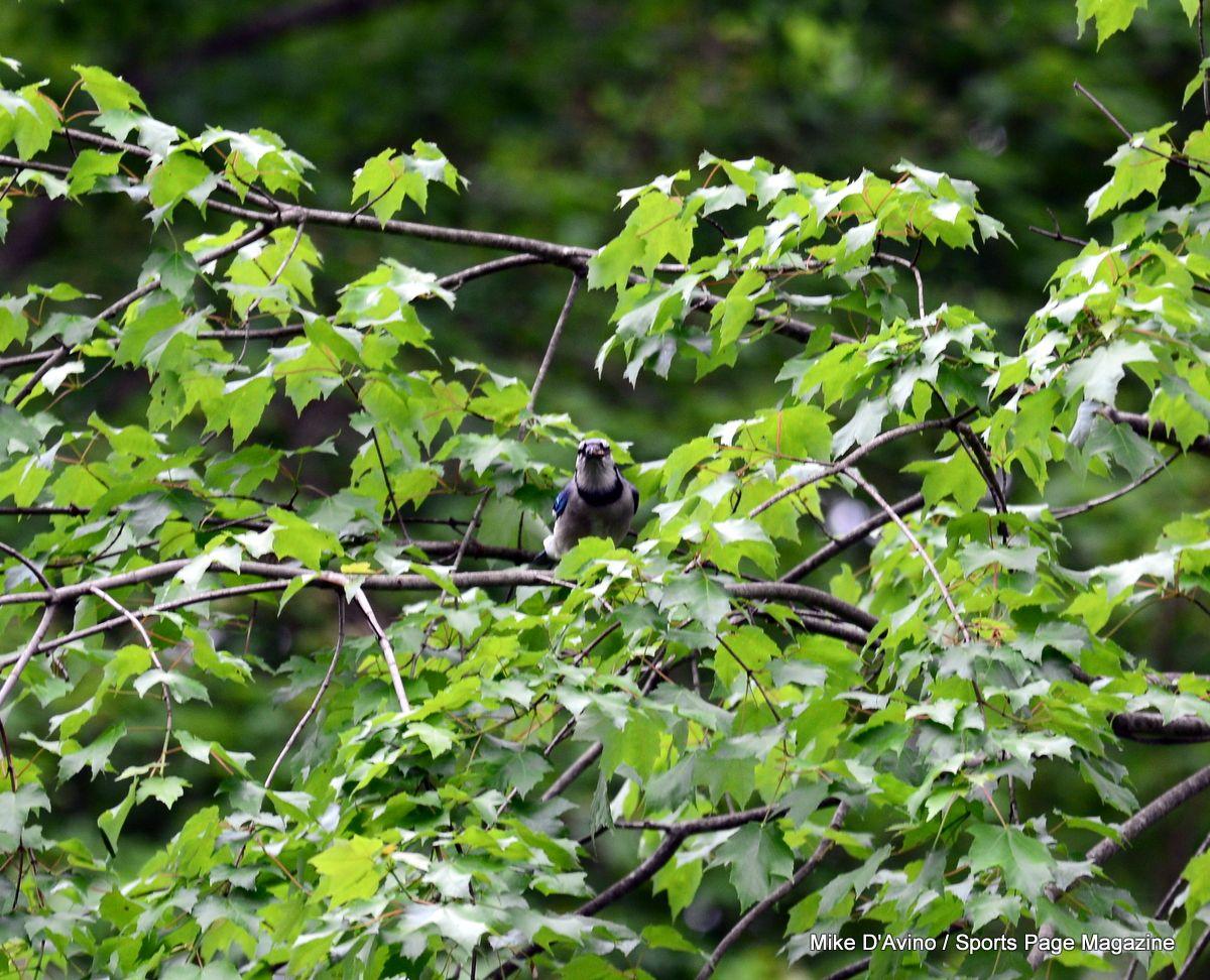 Farmington Canal Trail Hamden - Photo # 084