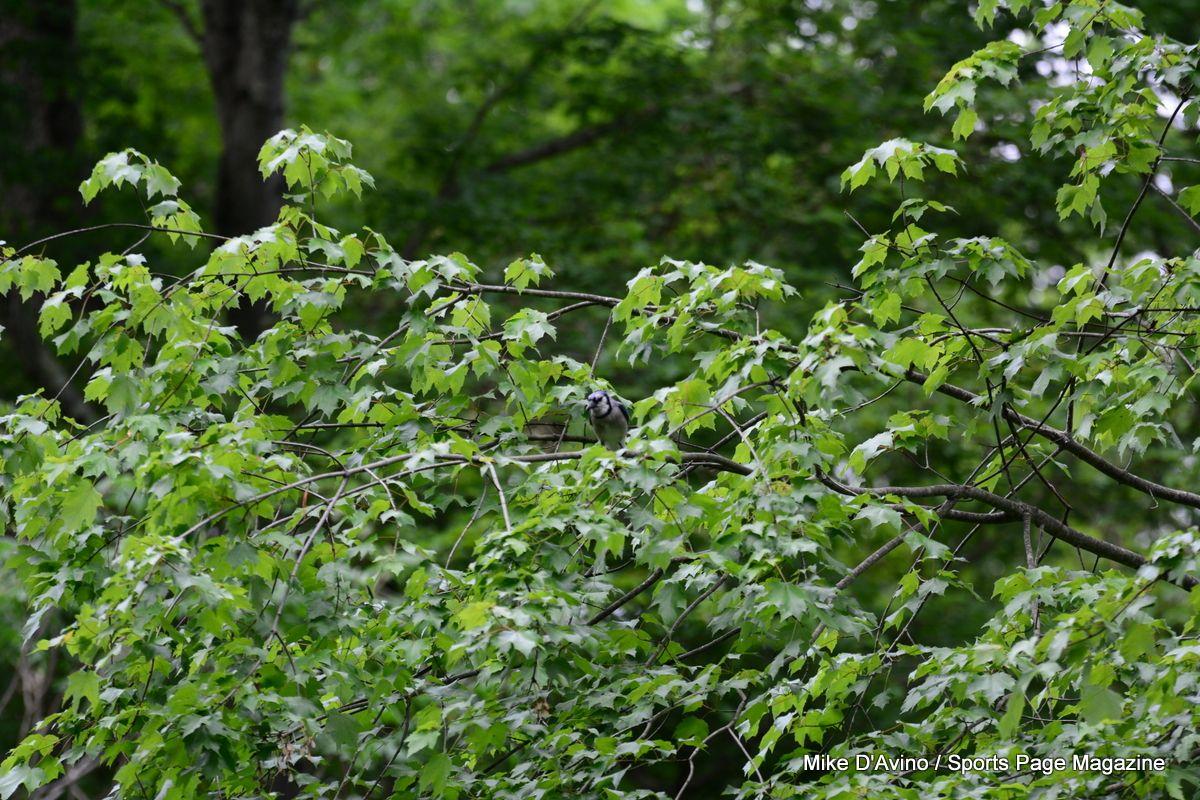 Farmington Canal Trail Hamden - Photo # 086