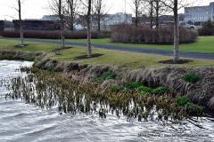 Iceland Vacation; Reykjavik Self City Walk - Photo # 2301