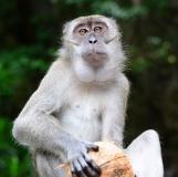 Gallery Non-Sports; Batu Caves - Gombak, Selangor, Malaysia - Photo # (24)