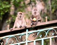 Gallery Non-Sports; Batu Caves - Gombak, Selangor, Malaysia - Photo # (30)
