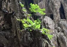 Gallery Non-Sports; Batu Caves - Gombak, Selangor, Malaysia - Photo # (50)