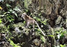 Gallery Non-Sports; Batu Caves - Gombak, Selangor, Malaysia - Photo # (55)