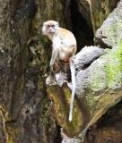 Gallery Non-Sports; Batu Caves - Gombak, Selangor, Malaysia - Photo # (56)