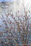 Mill Pond Way - Photo # (16)