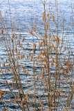 Mill Pond Way - Photo # (19)