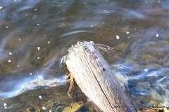 Mill Pond Way - Photo # (34)