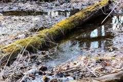 Mill Pond Way - Photo # (42)
