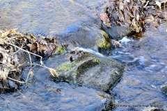 Mill Pond Way - Photo # (46)