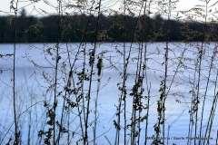 Mill Pond Way - Photo # (47)