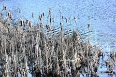 Mill Pond Way - Photo # (52)