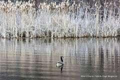 Mill Pond Way - Photo # (53)