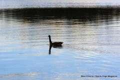 Mill Pond Way - Photo # (55)