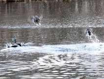 Mill Pond Way - Photo # (59)