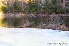 Mill Pond Way - Photo # (68)