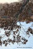 Mill Pond Way - Photo # (78)