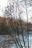 Mill Pond Way - Photo # (80)