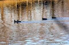 Mill Pond Way - Photo # (82)