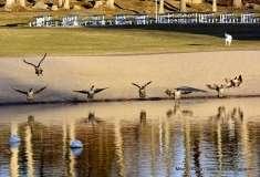 Mill Pond Way - Photo # (83)