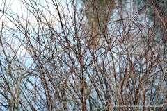 Mill Pond Way - Photo # (84)
