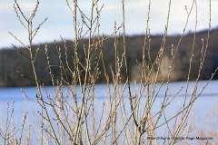 Mill Pond Way - Photo # (9)