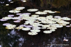 Gallery Non-Sports; Mill Pond Way - Photo # 065