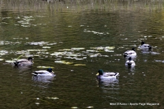 Gallery Non-Sports; Mill Pond Way - Photo # 155