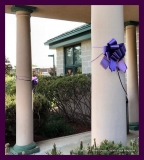 Paint Plainville Purple - Photo # (117)