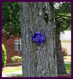 Paint Plainville Purple - Photo # (21)