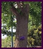 Paint Plainville Purple - Photo # (83)