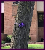 Paint Plainville Purple - Photo # (84)